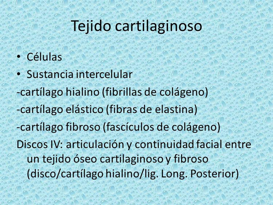 Tejido cartilaginoso Células Sustancia intercelular -cartílago hialino (fibrillas de colágeno) -cartílago elástico (fibras de elastina) -cartílago fib