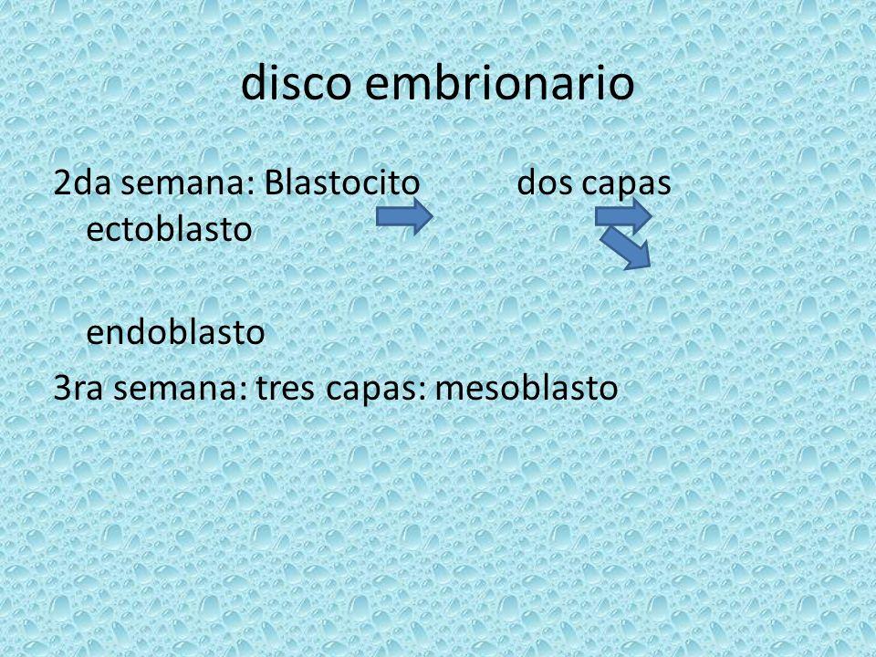 Diferenciación de las hojas embrionarias//tejidos y órganos Mesoblasto: 1-mesoblasto paraaxial: esclerotomo fibroblasto condroblasto osteoblasto 2-mesoblasto inter ½: nefrotomas 3-láminas laterales: somatopleura pared lateral y ventral esplacnopleura tapiza el tubo digestivo