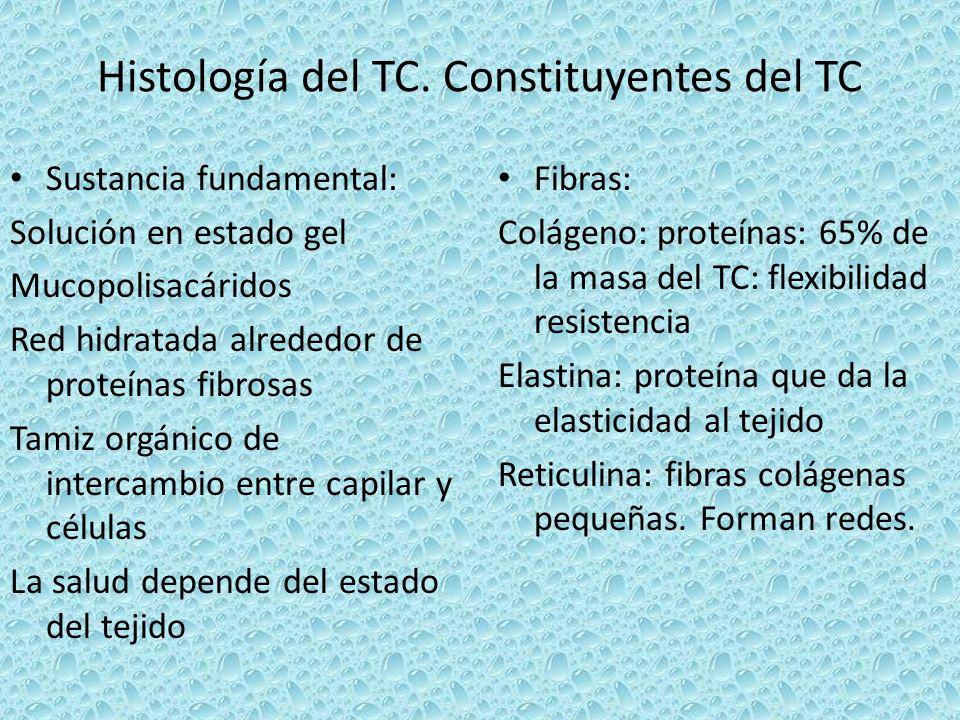 Histología del TC. Constituyentes del TC Sustancia fundamental: Solución en estado gel Mucopolisacáridos Red hidratada alrededor de proteínas fibrosas