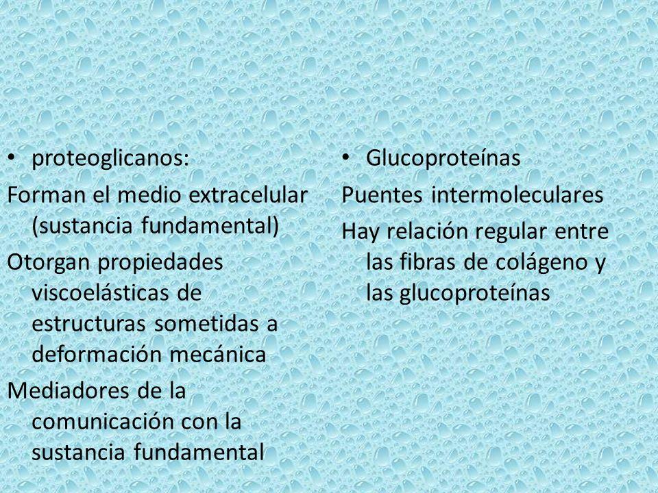 proteoglicanos: Forman el medio extracelular (sustancia fundamental) Otorgan propiedades viscoelásticas de estructuras sometidas a deformación mecánic