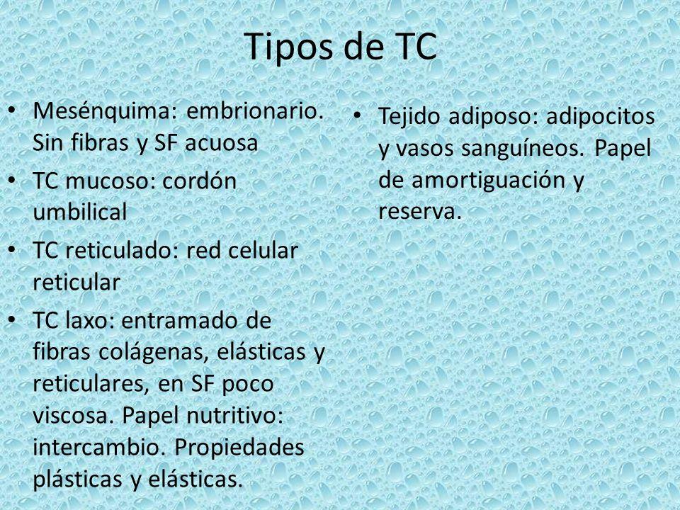 Tipos de TC Mesénquima: embrionario. Sin fibras y SF acuosa TC mucoso: cordón umbilical TC reticulado: red celular reticular TC laxo: entramado de fib
