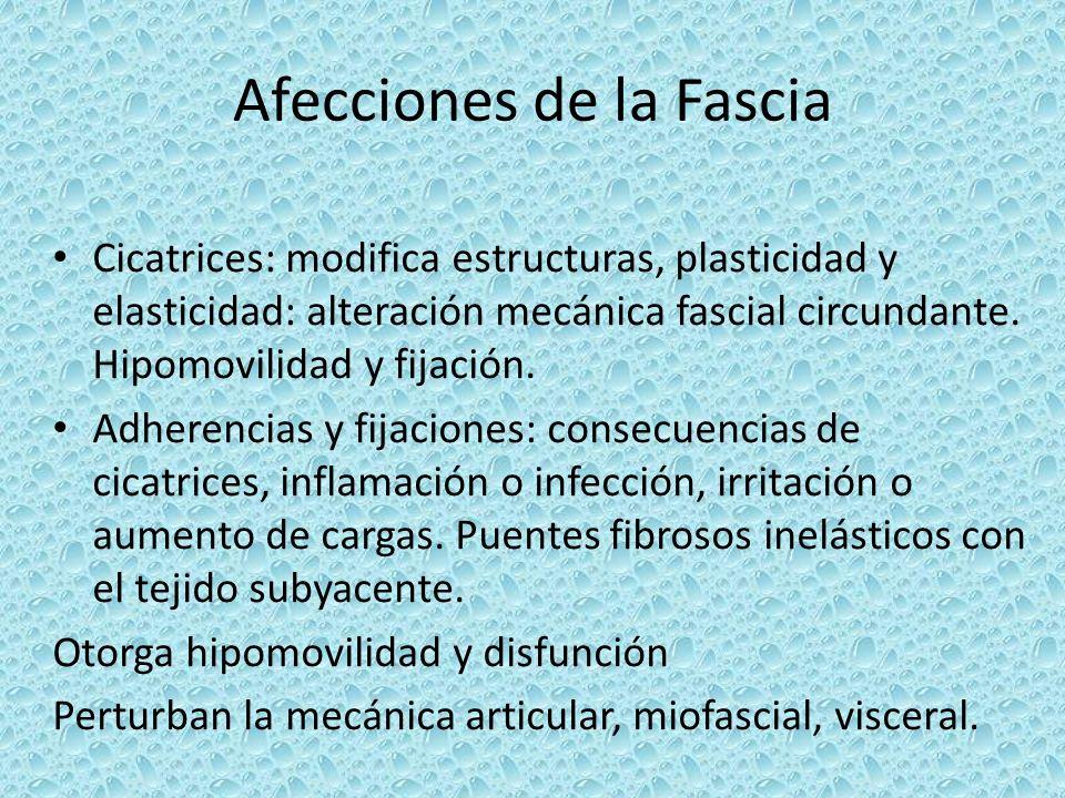Afecciones de la Fascia Cicatrices: modifica estructuras, plasticidad y elasticidad: alteración mecánica fascial circundante. Hipomovilidad y fijación