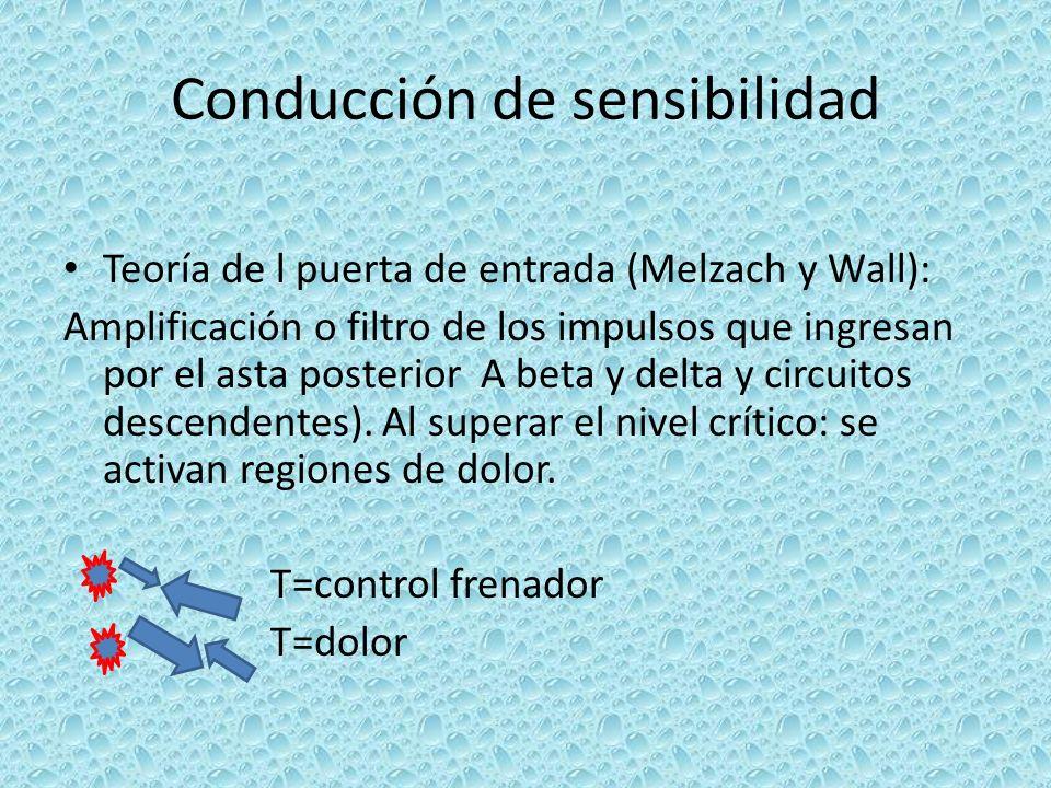 Conducción de sensibilidad Teoría de l puerta de entrada (Melzach y Wall): Amplificación o filtro de los impulsos que ingresan por el asta posterior A