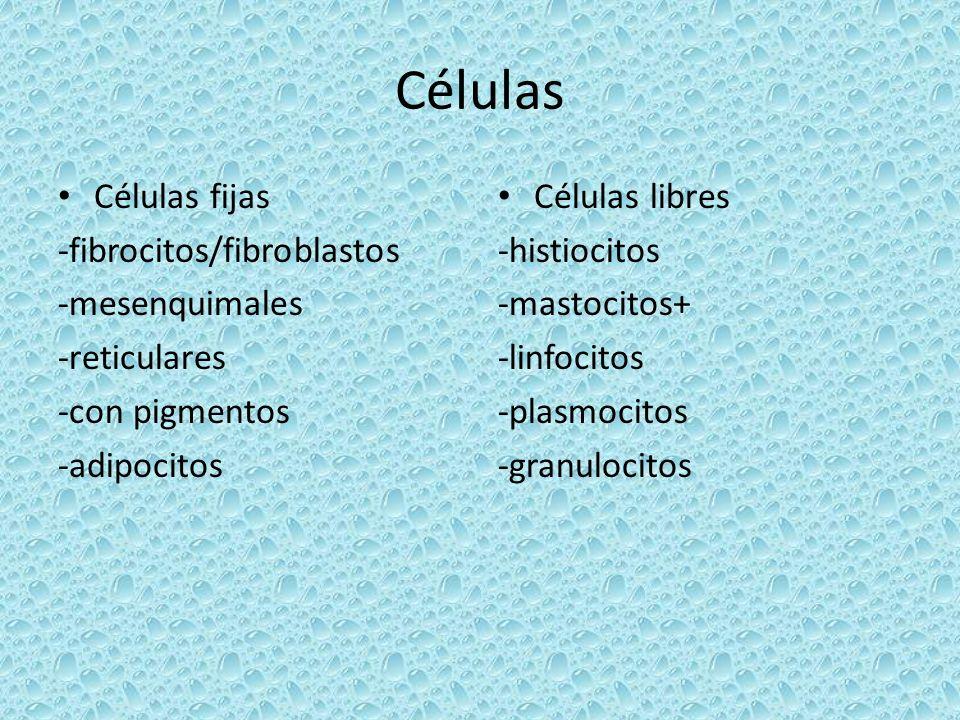 Histología del TC.