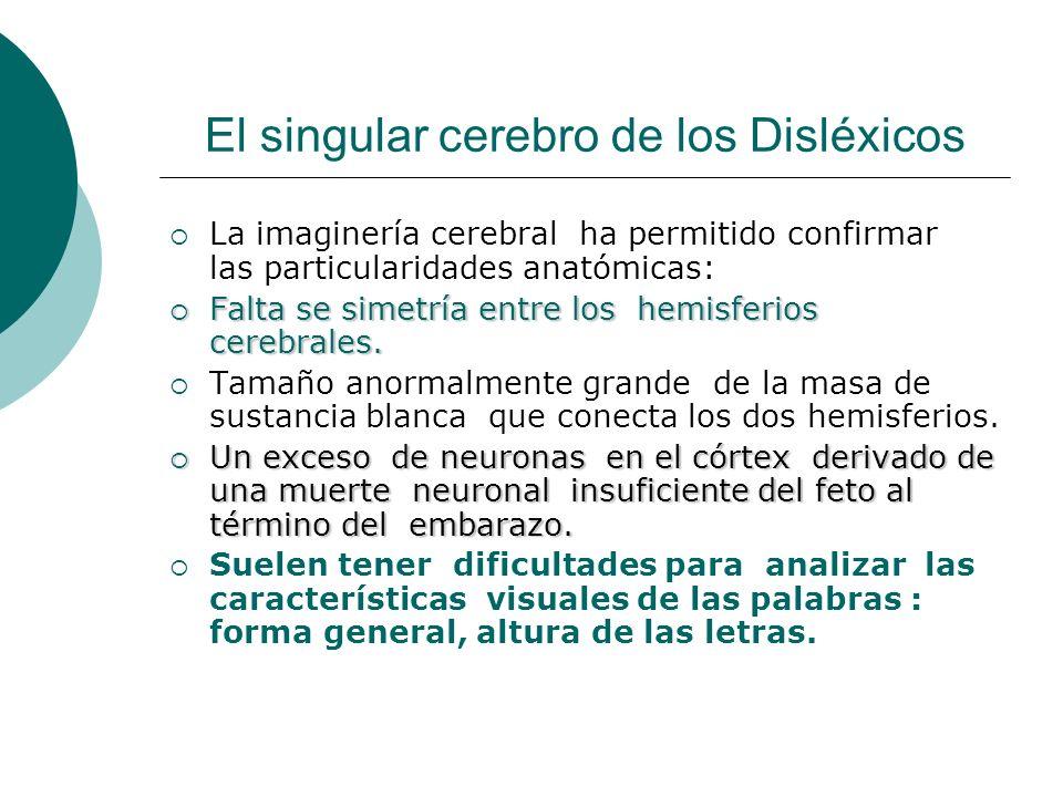 El singular cerebro de los Disléxicos La imaginería cerebral ha permitido confirmar las particularidades anatómicas: Falta se simetría entre los hemis
