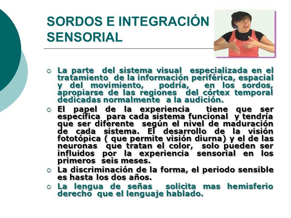 SORDOS E INTEGRACIÓN SENSORIAL La parte del sistema visual especializada en el tratamiento de la información periférica, espacial y del movimiento, po