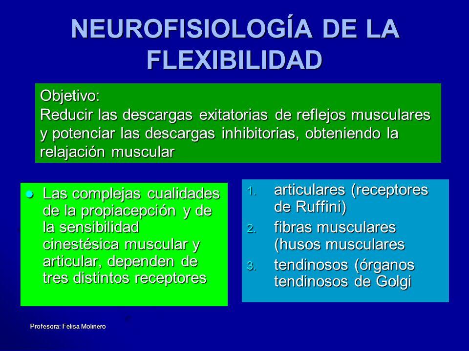 Profesora: Felisa Molinero NEUROFISIOLOGÍA DE LA FLEXIBILIDAD Las complejas cualidades de la propiacepción y de la sensibilidad cinestésica muscular y