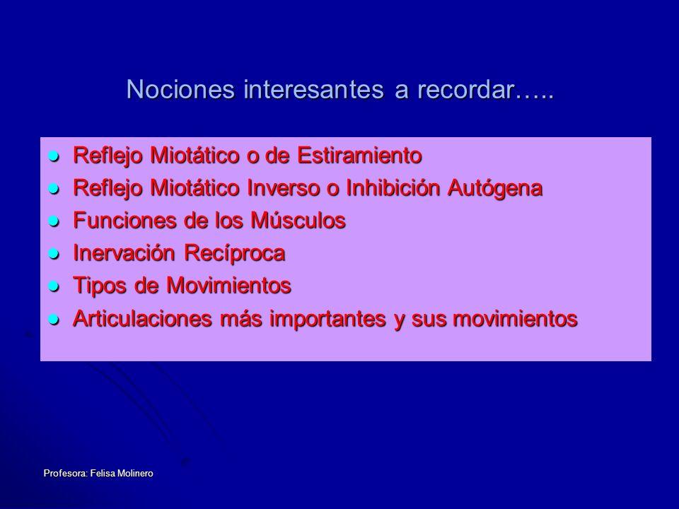Profesora: Felisa Molinero Nociones interesantes a recordar….. Reflejo Miotático o de Estiramiento Reflejo Miotático o de Estiramiento Reflejo Miotáti