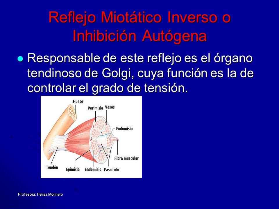 Profesora: Felisa Molinero Reflejo Miotático Inverso o Inhibición Autógena Responsable de este reflejo es el órgano tendinoso de Golgi, cuya función e