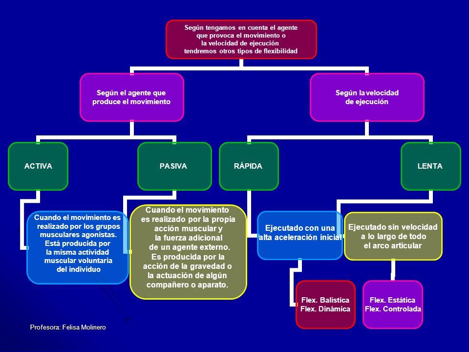 Profesora: Felisa Molinero.- MÉTODO ACTIVO ASISTIDO El estiramiento es realizado por la contracción inicial activa de los grupos musculares opuestos (antagonistas) a los que se pretende elongar.
