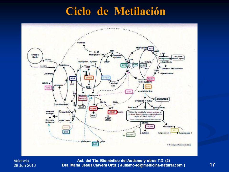 Valencia 29-Jun-2013 Act. del Tto. Biomédico del Autismo y otros T.D. (2) Dra. María Jesús Clavera Ortiz ( autismo-td@medicina-natural.com ) 17 Ciclo