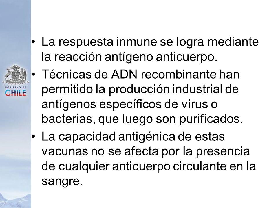 La respuesta inmune se logra mediante la reacción antígeno anticuerpo. Técnicas de ADN recombinante han permitido la producción industrial de antígeno