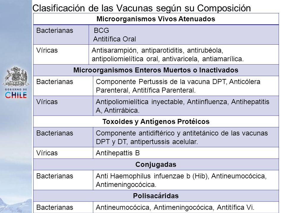 Clasificación de las Vacunas según su Composición Microorganismos Vivos Atenuados Bacterianas BCG Antitífica Oral VíricasAntisarampión, antiparotiditi