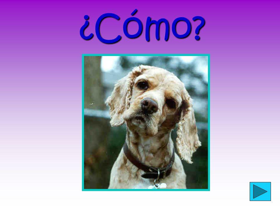 ¿Has fijado.¿Has fijado. (Did you notice?) What are the DOPs in English.