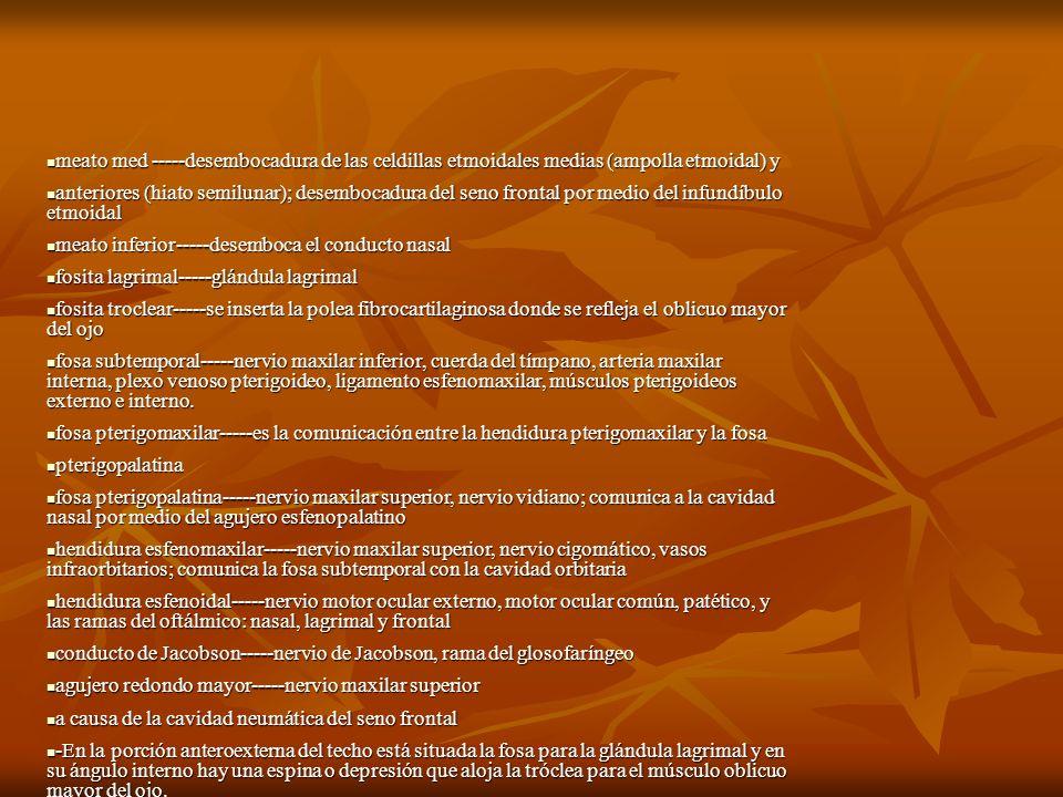 meato med -----desembocadura de las celdillas etmoidales medias (ampolla etmoidal) y meato med -----desembocadura de las celdillas etmoidales medias (