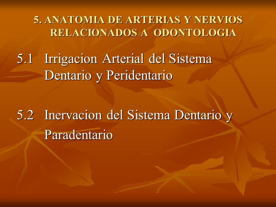 5. ANATOMIA DE ARTERIAS Y NERVIOS RELACIONADOS A ODONTOLOGIA 5.1 Irrigacion Arterial del Sistema Dentario y Peridentario 5.2Inervacion del Sistema Den