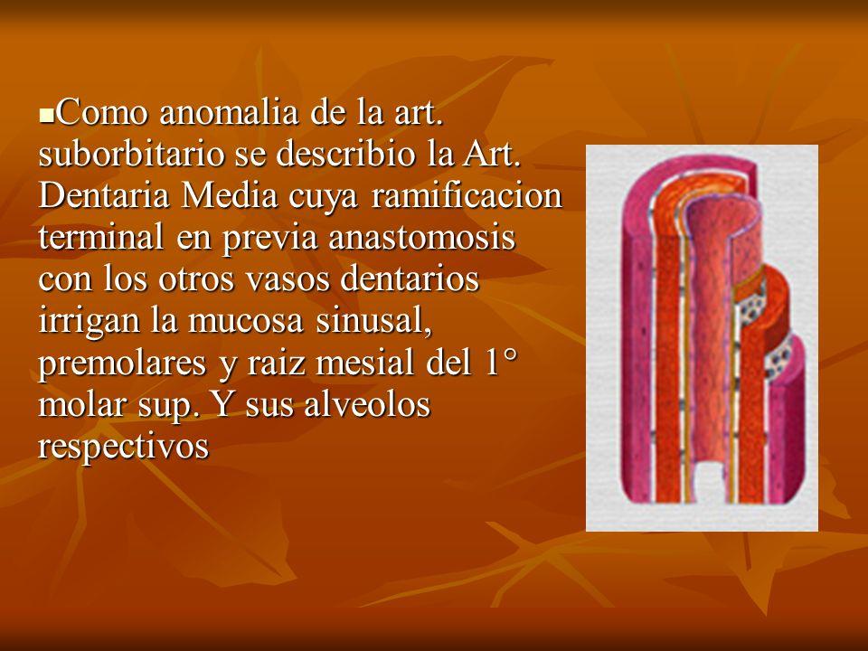Como anomalia de la art. suborbitario se describio la Art. Dentaria Media cuya ramificacion terminal en previa anastomosis con los otros vasos dentari