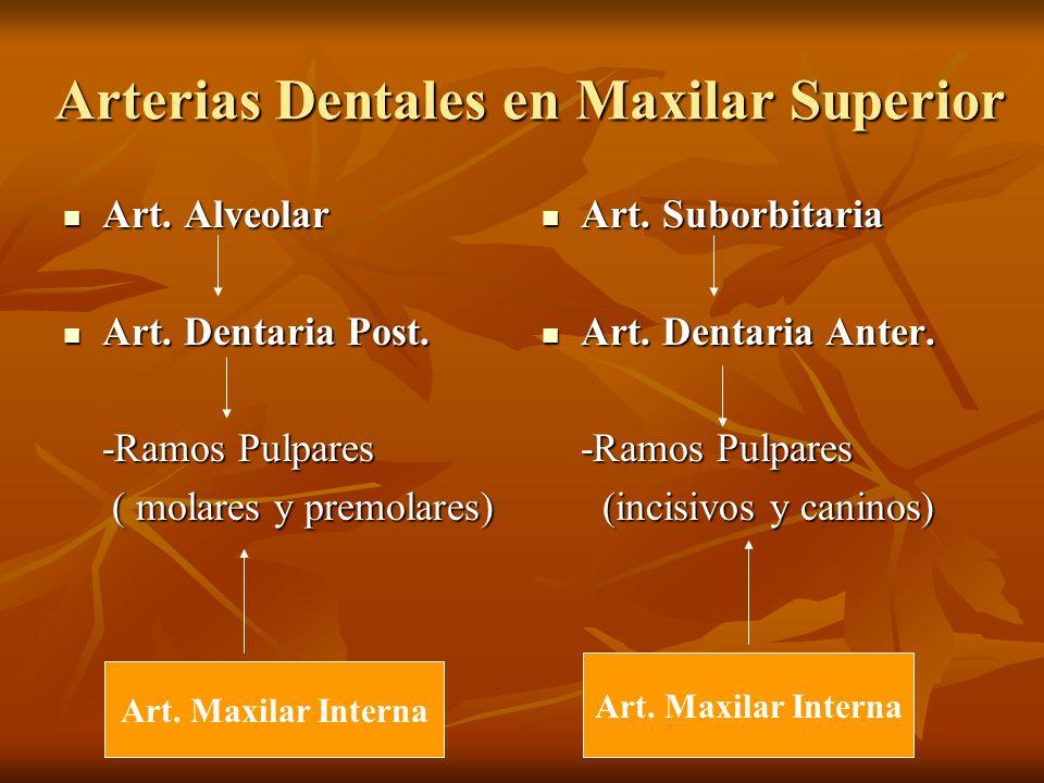 Arterias Dentales en Maxilar Superior Arterias Dentales en Maxilar Superior Art. Alveolar Art. Alveolar Art. Dentaria Post. Art. Dentaria Post. -Ramos