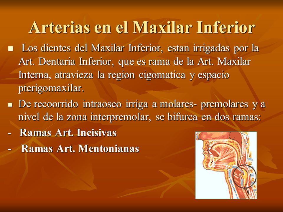 Arterias en el Maxilar Inferior Los dientes del Maxilar Inferior, estan irrigadas por la Art. Dentaria Inferior, que es rama de la Art. Maxilar Intern
