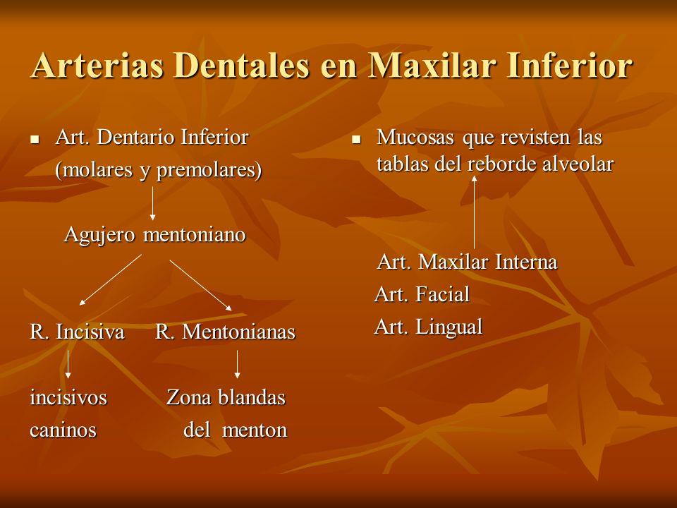 Arterias Dentales en Maxilar Inferior Art. Dentario Inferior Art. Dentario Inferior (molares y premolares) Agujero mentoniano Agujero mentoniano R. In