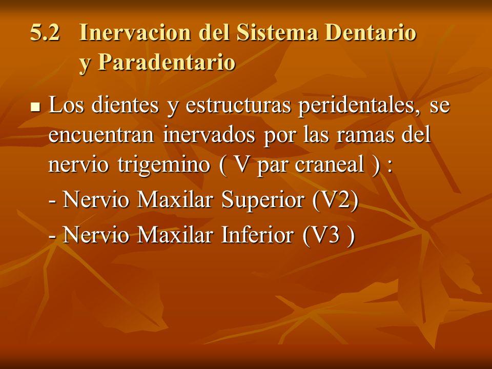 5.2Inervacion del Sistema Dentario y Paradentario 5.2Inervacion del Sistema Dentario y Paradentario Los dientes y estructuras peridentales, se encuent