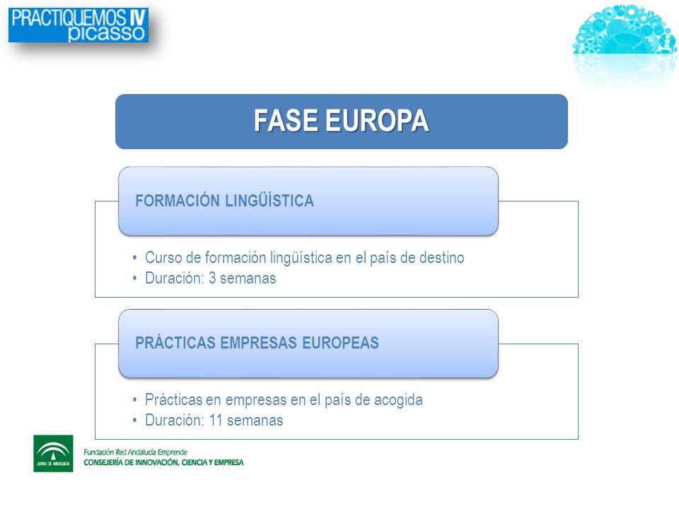 FASE EUROPA Curso de formación lingüística en el país de destino Duración: 3 semanas FORMACIÓN LINGÜÍSTICA Prácticas en empresas en el país de acogida Duración: 11 semanas PRÁCTICAS EMPRESAS EUROPEAS
