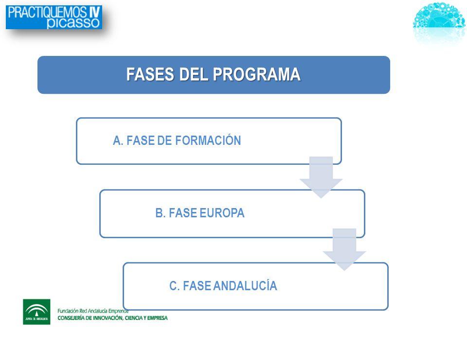 A. FASE DE FORMACIÓN B. FASE EUROPA C. FASE ANDALUCÍA FASES DEL PROGRAMA