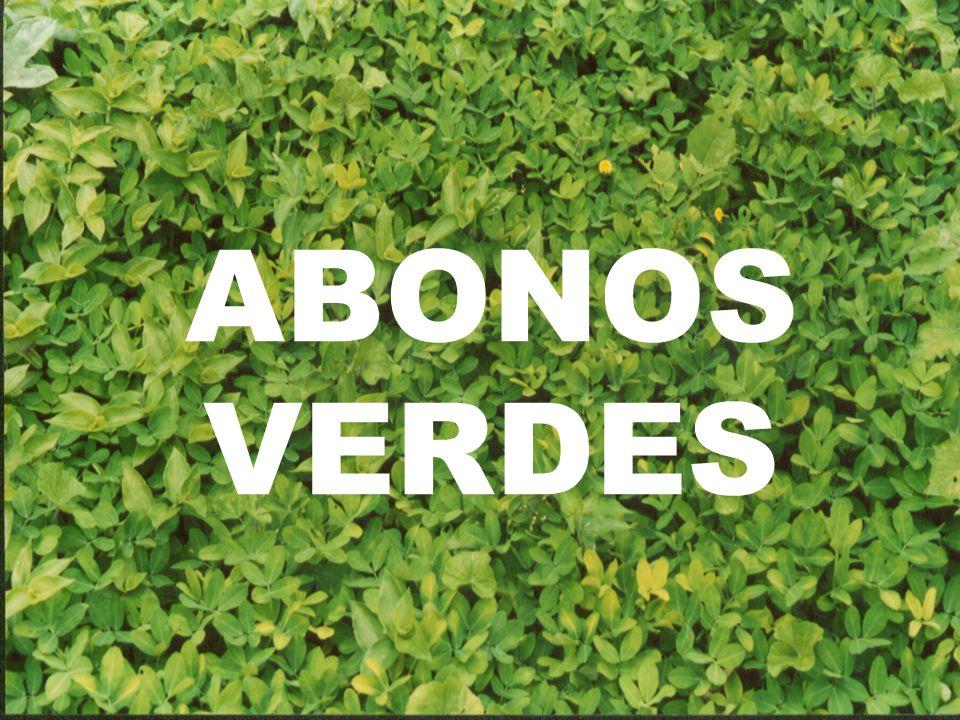 a.Son cultivos de cobertura cuya finalidad es devolverle a través de ellos su fertilidad al suelo.