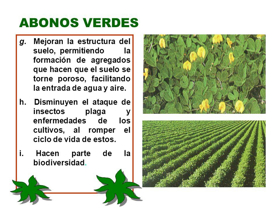 Siembra de los Abonos Verdes: 1.Es similar a la de cualquier cultivo y requiere los mismos cuidados.