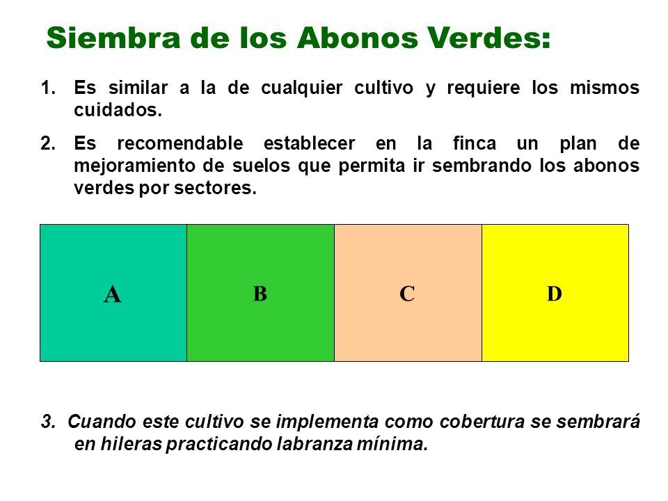 Siembra de los Abonos Verdes: 1.Es similar a la de cualquier cultivo y requiere los mismos cuidados. 2.Es recomendable establecer en la finca un plan