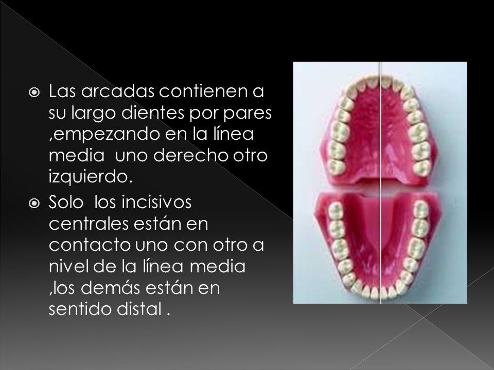 La arcada inferior es mas estrecha cuando es medida a nivel de las superficies vestibulares de los dientes posteriores de la arcada superior.
