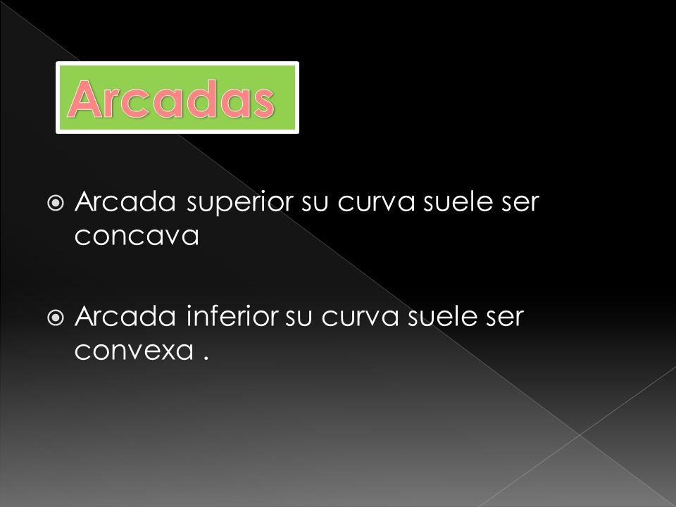 ARCADA OVOIDEA ARCADA TRIANGULAR ARCADA CUADRANGULAR