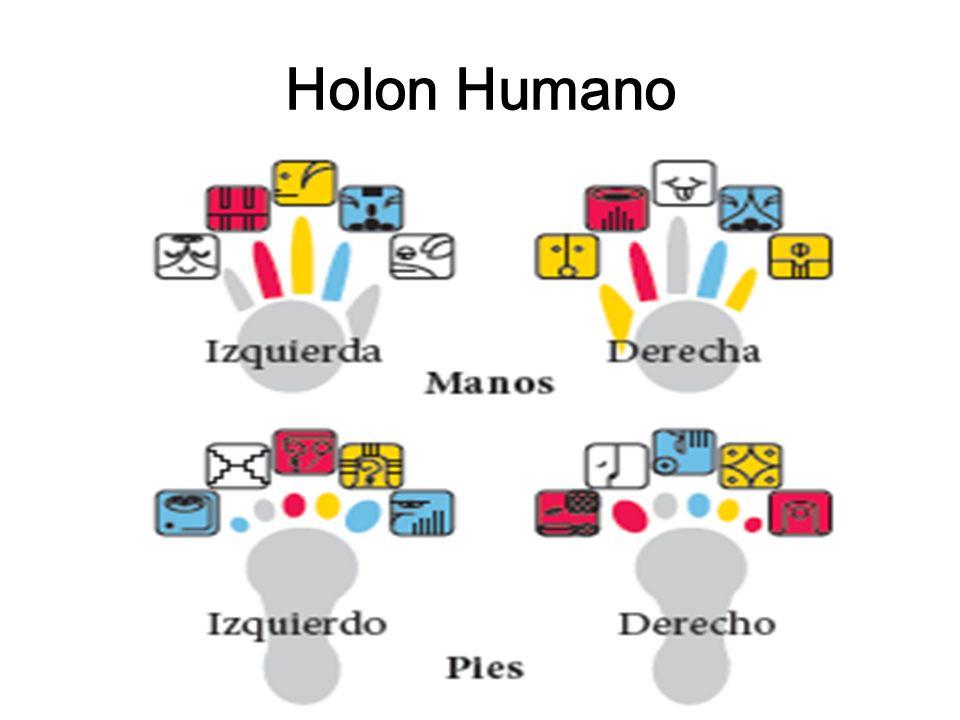 Holon Humano