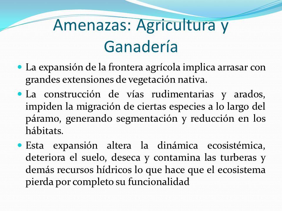 Amenazas: Agricultura y Ganadería La expansión de la frontera agrícola implica arrasar con grandes extensiones de vegetación nativa. La construcción d