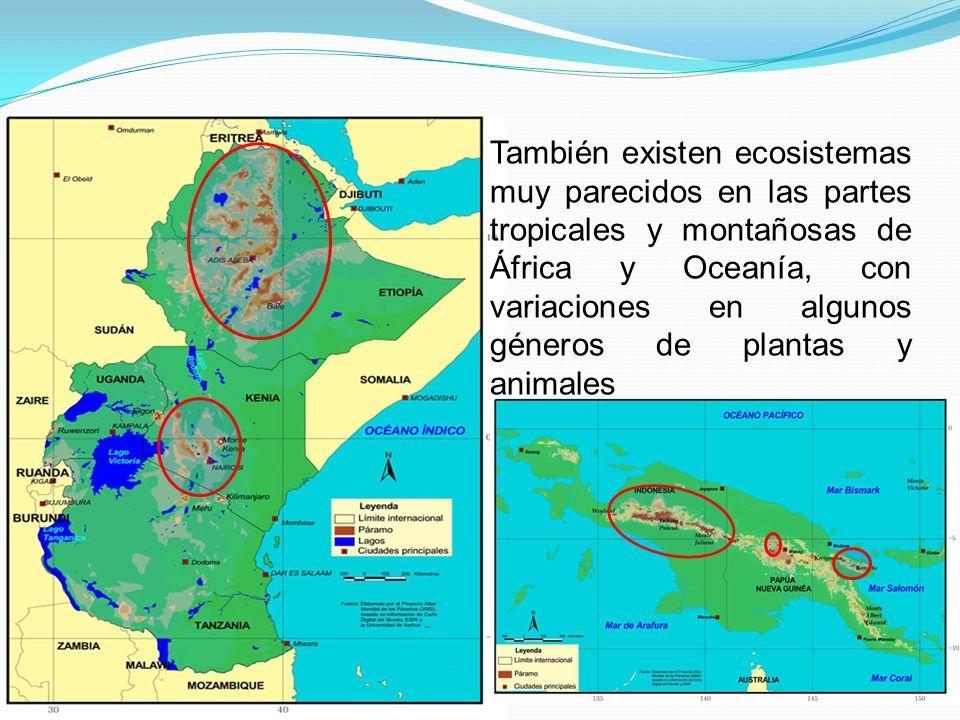 También existen ecosistemas muy parecidos en las partes tropicales y montañosas de África y Oceanía, con variaciones en algunos géneros de plantas y a