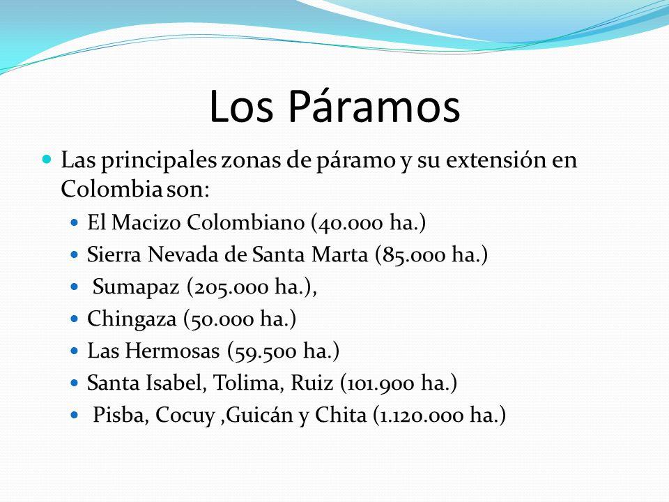 Los Páramos Las principales zonas de páramo y su extensión en Colombia son: El Macizo Colombiano (40.000 ha.) Sierra Nevada de Santa Marta (85.000 ha.