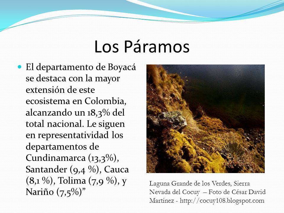 Los Páramos El departamento de Boyacá se destaca con la mayor extensión de este ecosistema en Colombia, alcanzando un 18,3% del total nacional. Le sig