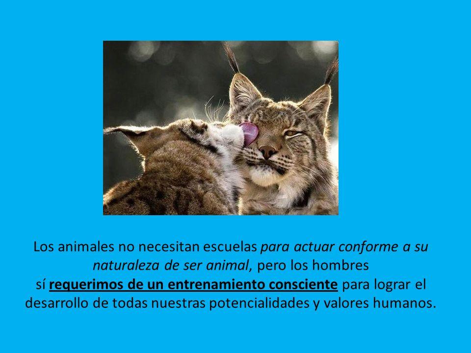 Los animales no necesitan escuelas para actuar conforme a su naturaleza de ser animal, pero los hombres sí requerimos de un entrenamiento consciente para lograr el desarrollo de todas nuestras potencialidades y valores humanos.