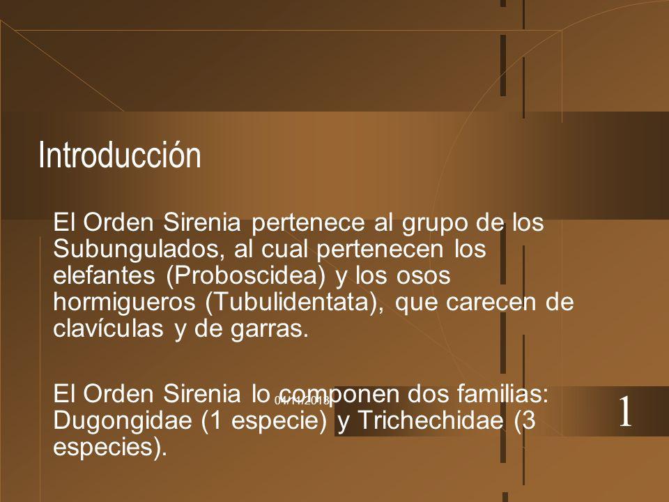 04/11/2013 Introducción El Orden Sirenia pertenece al grupo de los Subungulados, al cual pertenecen los elefantes (Proboscidea) y los osos hormigueros
