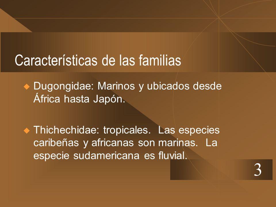 Características de las familias Dugongidae: Marinos y ubicados desde África hasta Japón. Thichechidae: tropicales. Las especies caribeñas y africanas