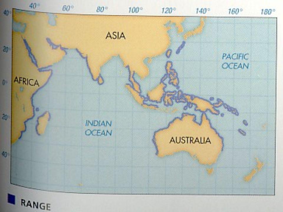 Trichechidae: Manatí Caribeño Residen en hábitats marinos y fluviales.