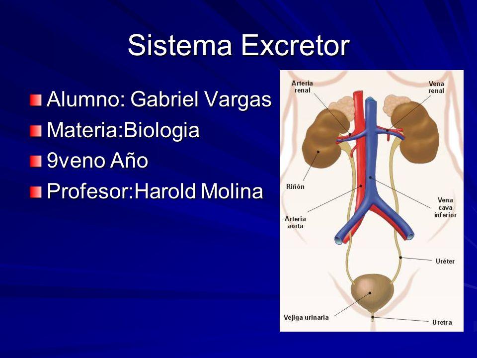 Sistema Excretor Alumno: Gabriel Vargas Materia:Biologia 9veno Año Profesor:Harold Molina