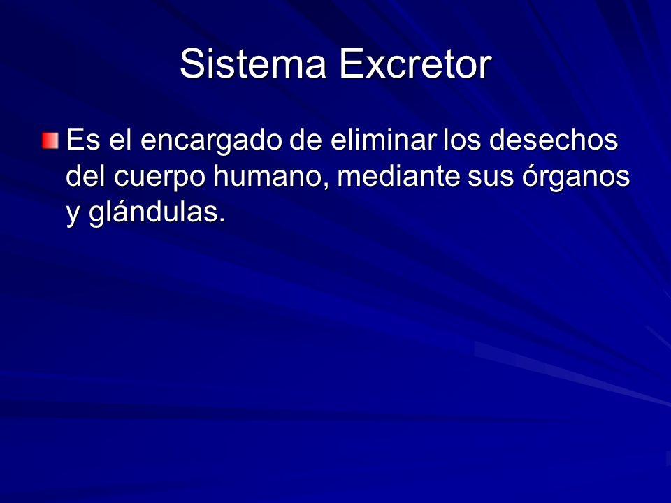 Sistema Excretor Es el encargado de eliminar los desechos del cuerpo humano, mediante sus órganos y glándulas.