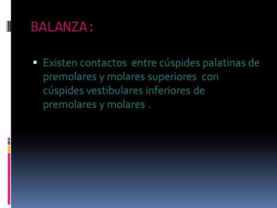 BALANZA: Existen contactos entre cúspides palatinas de premolares y molares superiores con cúspides vestibulares inferiores de premolares y molares.