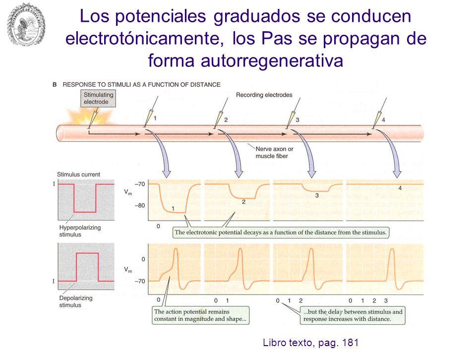 Potenciales graduados o locales Son cambios en el E m de tipo despolarizante o hiperpolarizante que se presentan en una región de la membrana celular y cuya magnitud depende de la intensidad del estímulo.