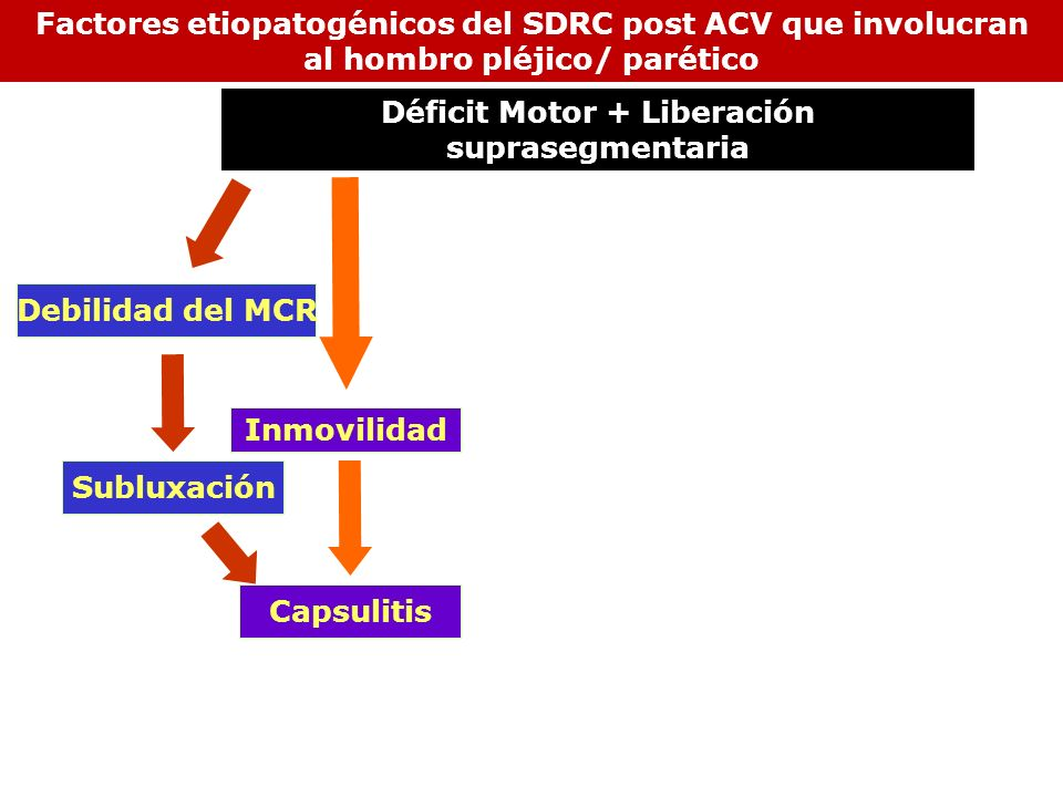 Inmovilidad Subluxación Debilidad del MCR Capsulitis Factores etiopatogénicos del SDRC post ACV que involucran al hombro pléjico/ parético Déficit Mot