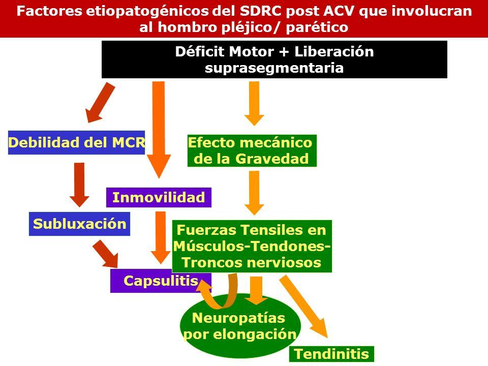 Inmovilidad Subluxación Neuropatías por elongación Debilidad del MCR Capsulitis Efecto mecánico de la Gravedad Fuerzas Tensiles en Músculos-Tendones-