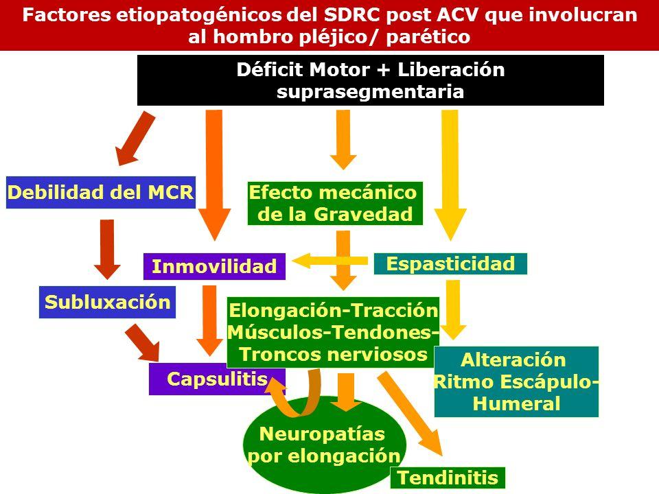 Inmovilidad Subluxación Neuropatías por elongación Debilidad del MCR Capsulitis Efecto mecánico de la Gravedad Elongación-Tracción Músculos-Tendones-