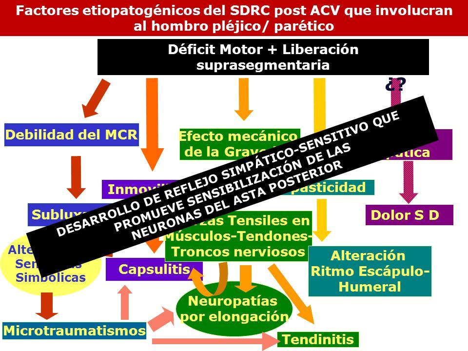 Inmovilidad Subluxación Alteraciones Sensitivas Simbólicas Neuropatías por elongación Déficit Motor + Liberación suprasegmentaria Debilidad del MCR Ca