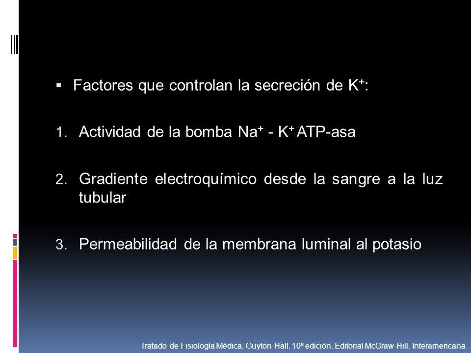 Factores que controlan la secreción de K + : 1. Actividad de la bomba Na + - K + ATP-asa 2. Gradiente electroquímico desde la sangre a la luz tubular
